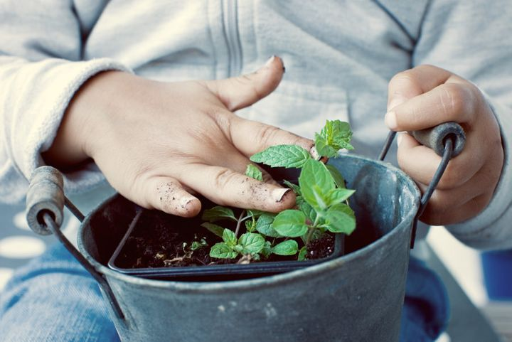 Mint is a durable, fast growing herb (and goes exceptionally well in smoothies, juices and teas).