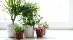 Indoor Plants That Make Your Home Super Lush (And Are Hard To