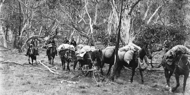 Men droving horses through the Snowy River in 1933.
