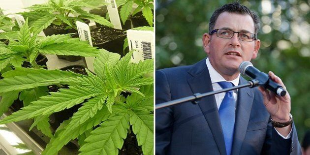 Daniel Andrews has shown off the first look of his state's cannabis