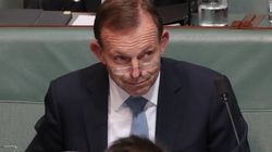 Tony Abbott Was Passed Out Drunk During Important Parliamentary
