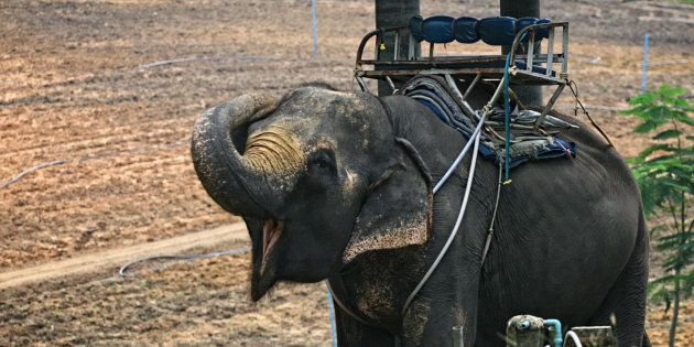 It's Time To Turn Our Backs On Elephant Rides As