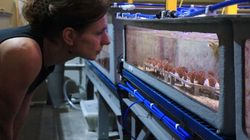 Scientists Find Coral Immune To Bleaching, In New Hope For