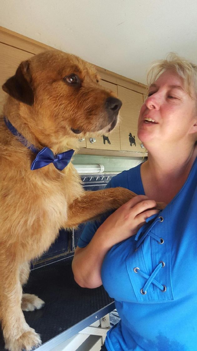 Shelter Dog Brings Companionship To Aussies With Cerebral