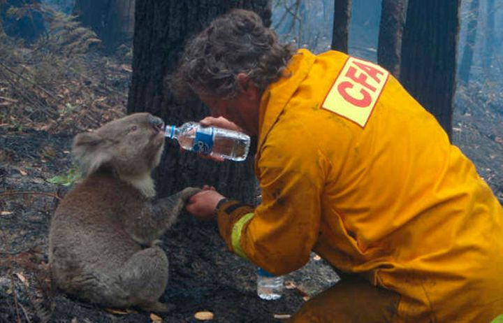 A koala is given a drink of water by a volunteer near Melbourne in 2009.