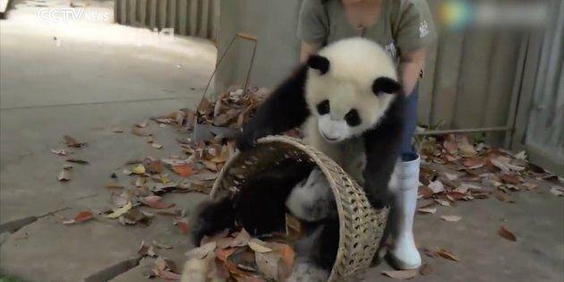 Pandas make it impossible to work.