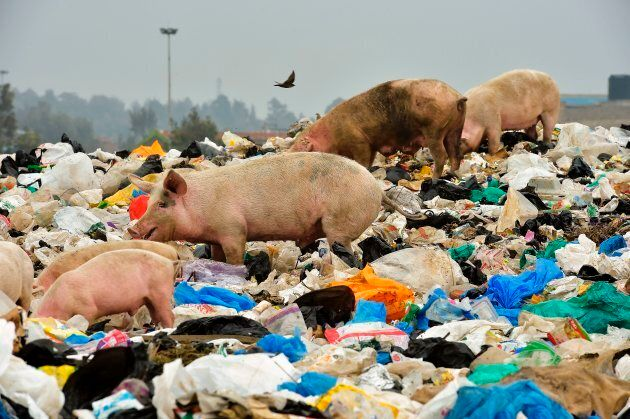Plastic bags harm both the environment and the animals that live within