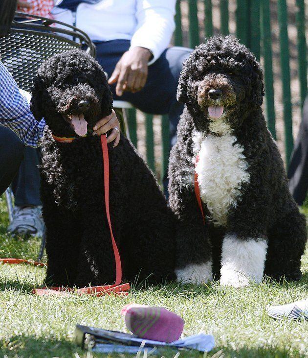 Bo and Sunny Obama