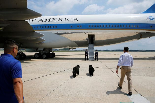 Bo and Sunny board Air Force One.