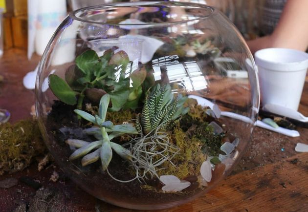 Succulents are the easiest to grow and the hardest to