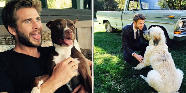 Liam Hemsworth Has Finally Been Recognised As 'Doggy Dad Of The