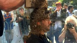 Un-bee-lievable Stunt To Promote Indie Film Breaks World