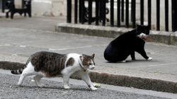 There's A Bitter Cat Rivalry Developing At 10 Downing