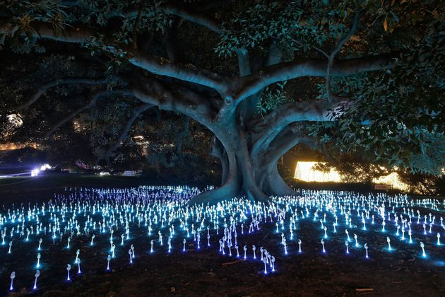 Keeping tree huggers at bay... a tree is illuminated at the 'Garden of Light'