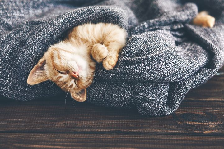 This kitty has the right idea for winter.