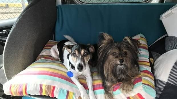 TJ, a 10-year-old fox terrier and Bella, a six-year-old pomeranian-silky are looking for a loving