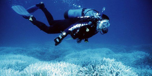 Marine activist Suzanne Kavanagh swims above coral bleaching on the Great Barrier
