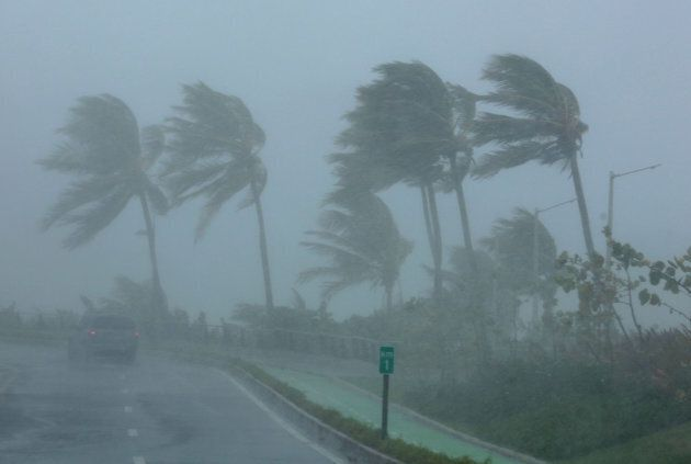 Palm trees bend in the wind as Hurricane Irma slammed across islands in the northern Caribbean on Wednesday,...