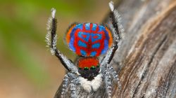 This Enchanting New Species Of Spiders Won't Give You