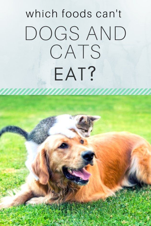 What Foods Can T Dogs And Cats Eat