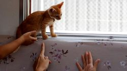 There's A Good Reason Cats Were Let Loose On A Train In