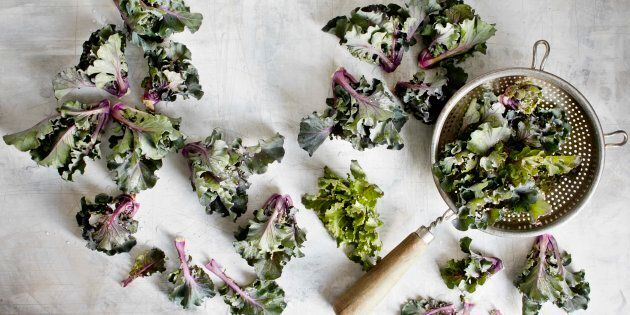 Kalettes got their curly leaves from mum and their tightly packed bunches from dad.