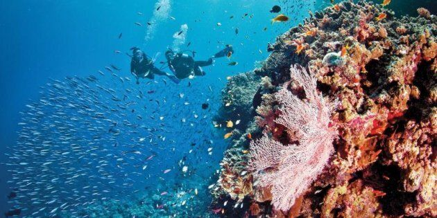 Scuba diving on the Great Barrier Reef gets an 'A'
