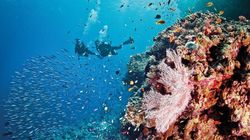 The Great Barrier Reef Gets A 'D' ...
