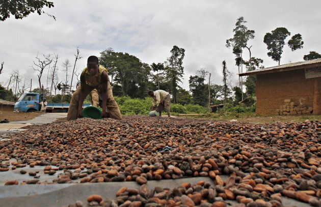 The Ivory Coast is the world's top cocoa