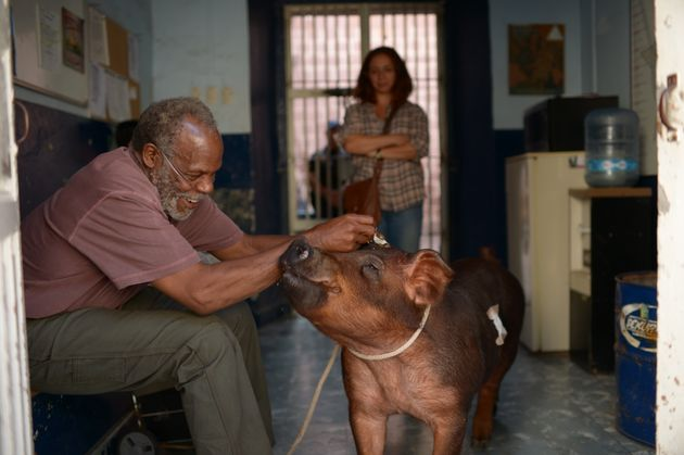 Danny Glover, Maya Rudolph and a pig star in 'Mr.
