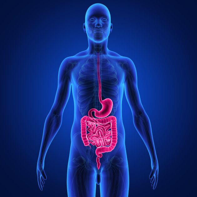 Here's a creepy diagram you can use to understand the digestive process.