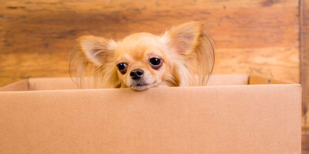 Pre-planning is key to avoid being a sad chihuahua.