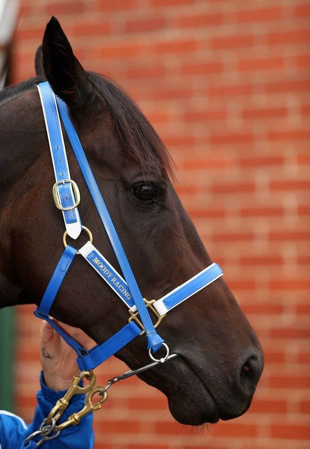 Fun fact: Black Caviar was actually