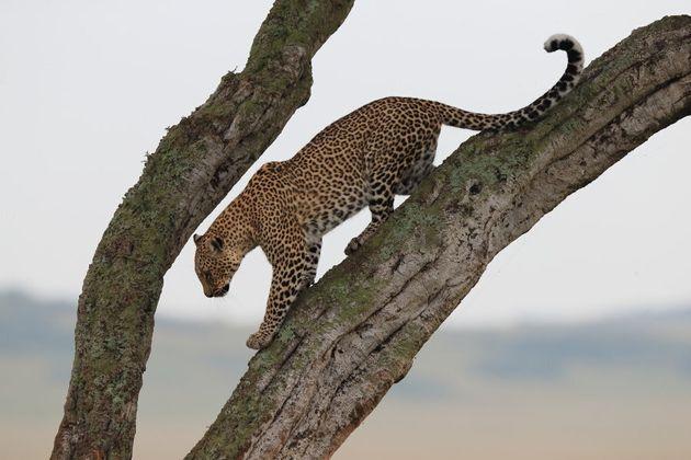Wildlife Photographer Jonathan Scott Is Taking You Behind The