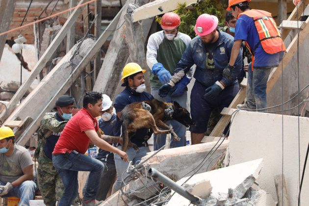 A dog is held by a rescue worker during the search for students at Enrique Rebsamen