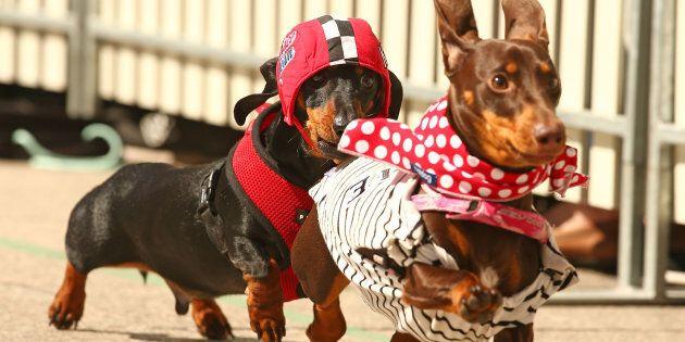 The race is part of Melbourne's Oktoberfest celebration.