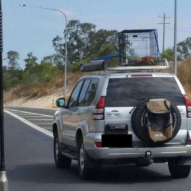 RSPCA Investigating After Puppy Pictured Strapped To Roof Of Car On Queensland's Bruce