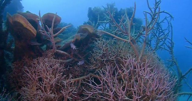 The coral in the blue hole was healthy and well preserved.