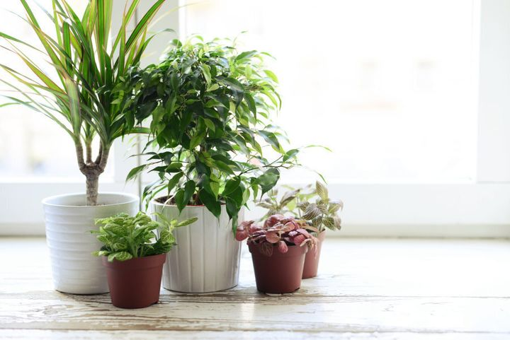 Group your plants together and go for a variety of pot styles.