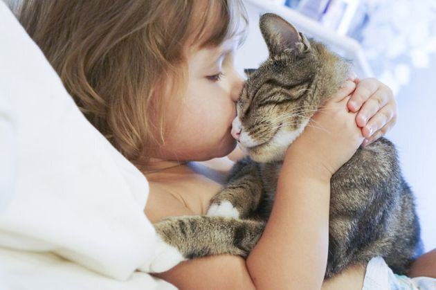 Salmonella can be passed from humans to cats and vice