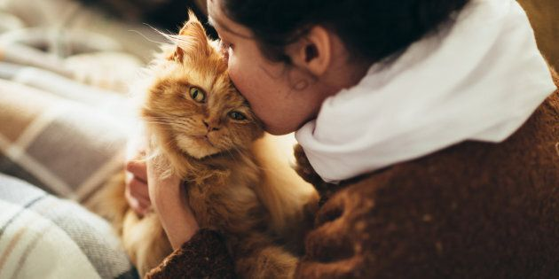 The outbreak has been contained, so you can kiss your cat, but you might not want to after