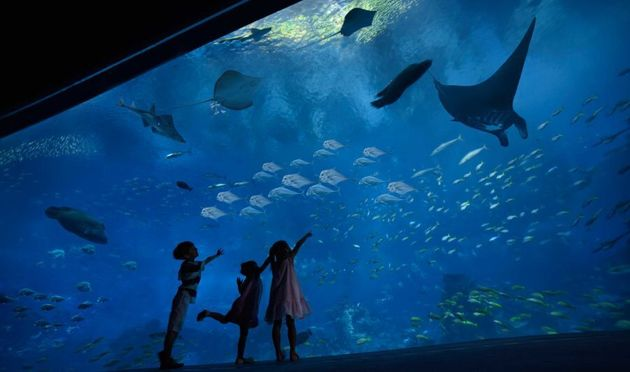 There are stingrays in this tank that can cause an