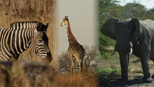 Seventy-Five Percent Of The World's Species Could Be Gone By