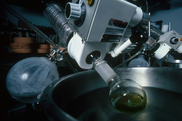 THC (tetrahydrocannabinol), the active ingredient in marijuana, is pictured here being extracted for...