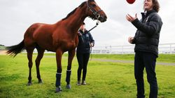 If You Love 'Straya, We Just Found The Horse And Trainer For