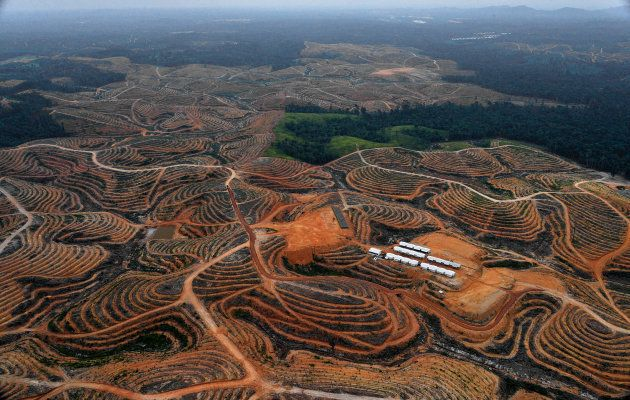 An area in Borneo's Central Kalimantan province cleared for palm oil plantations.