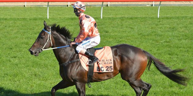 Black Caviar retired in 2013, just before her eighth