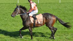 Black Caviar's Offspring May Be Racing Sooner Than You