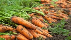 We're Facing Our Biggest Over-Supply Of Carrots In 25