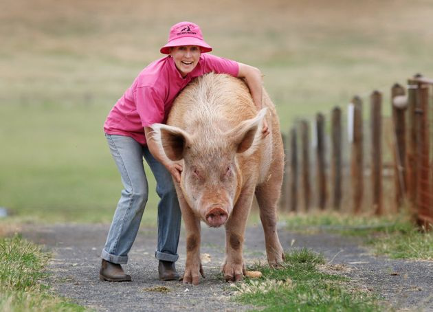 Pam Ahern with Mrs Peaches who was one of the pigs cast in Charlotte's